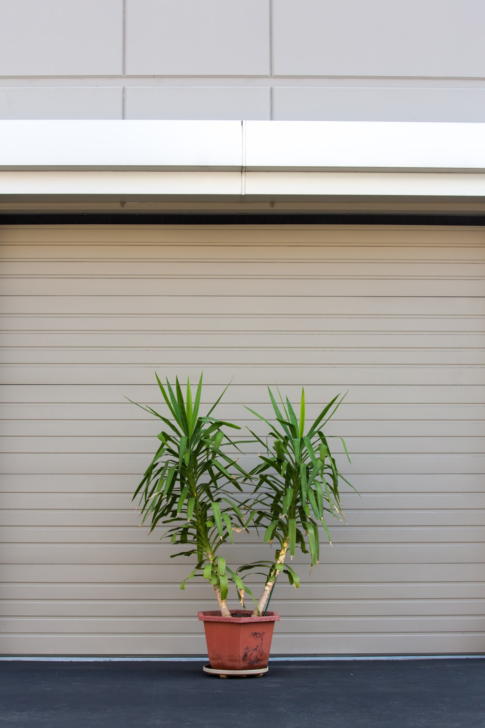 potted plant beside shutter roller
