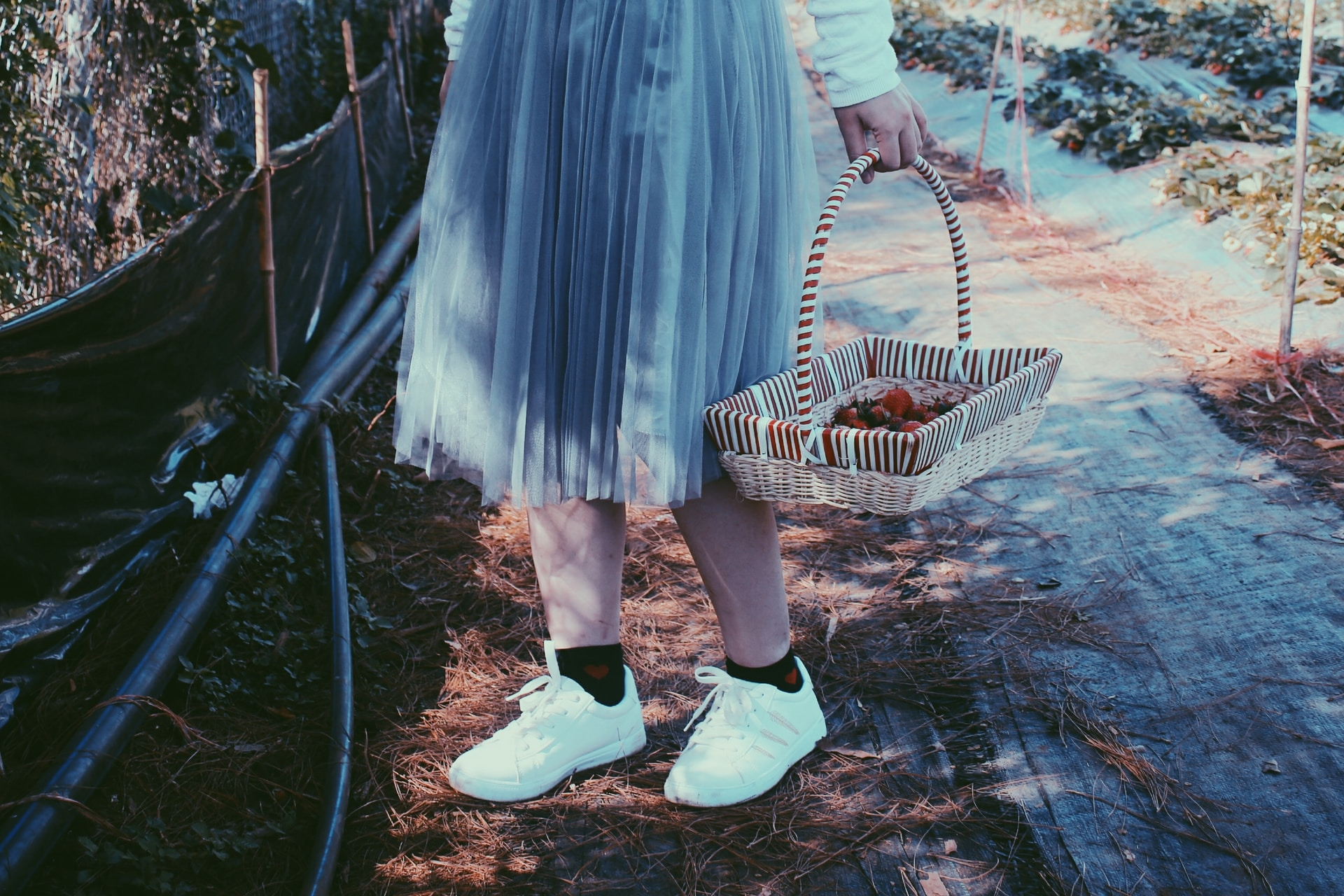 person standing near plant holding basket