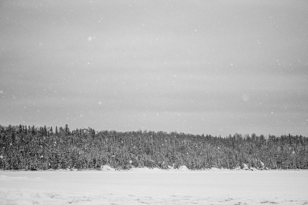 snowfield near forest