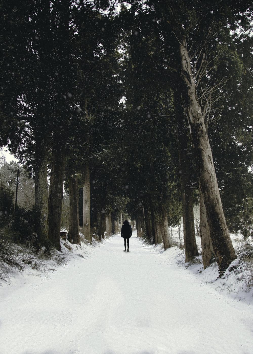man walking on snow pathway between trees
