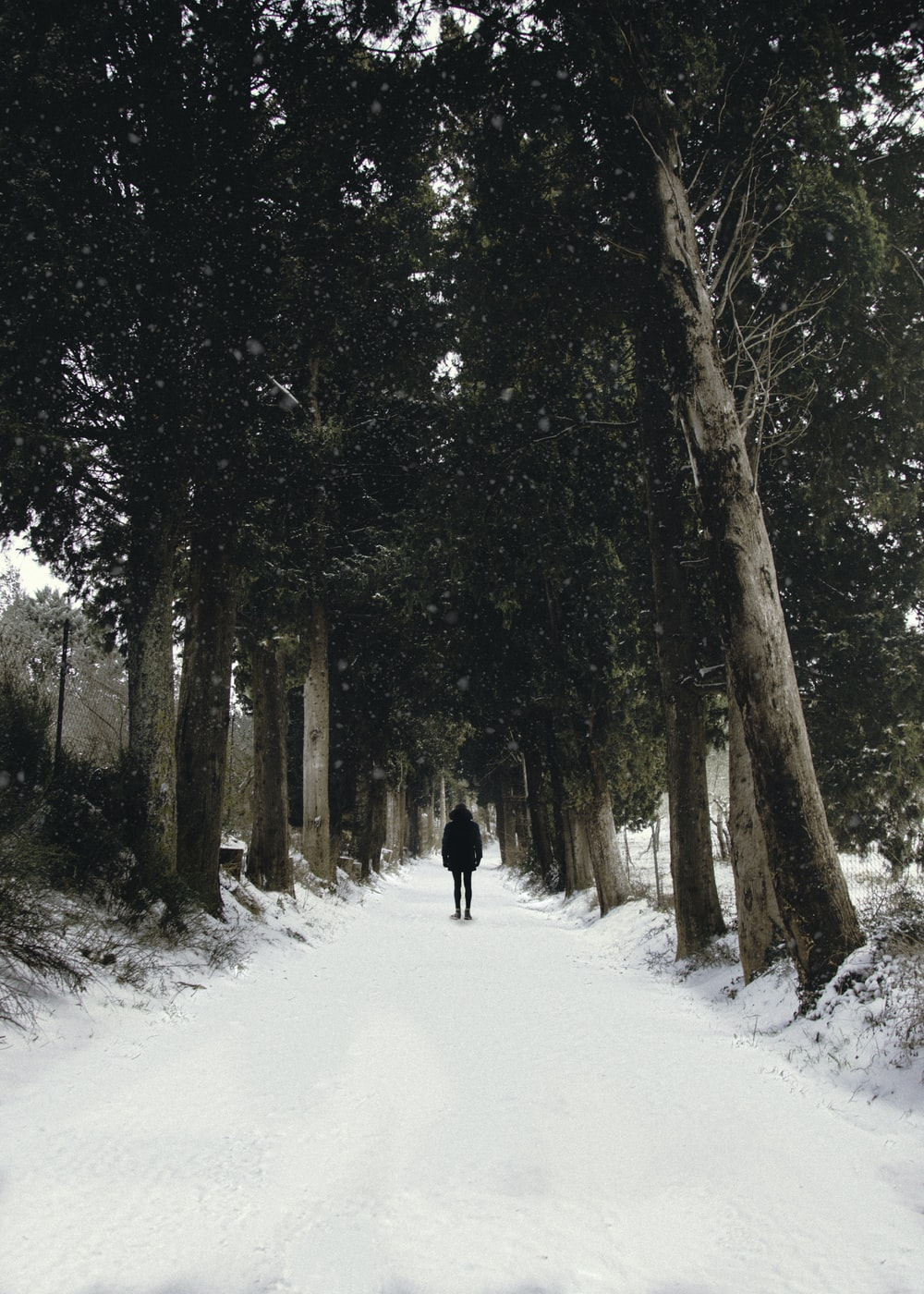 man walking on snow pathway between trees