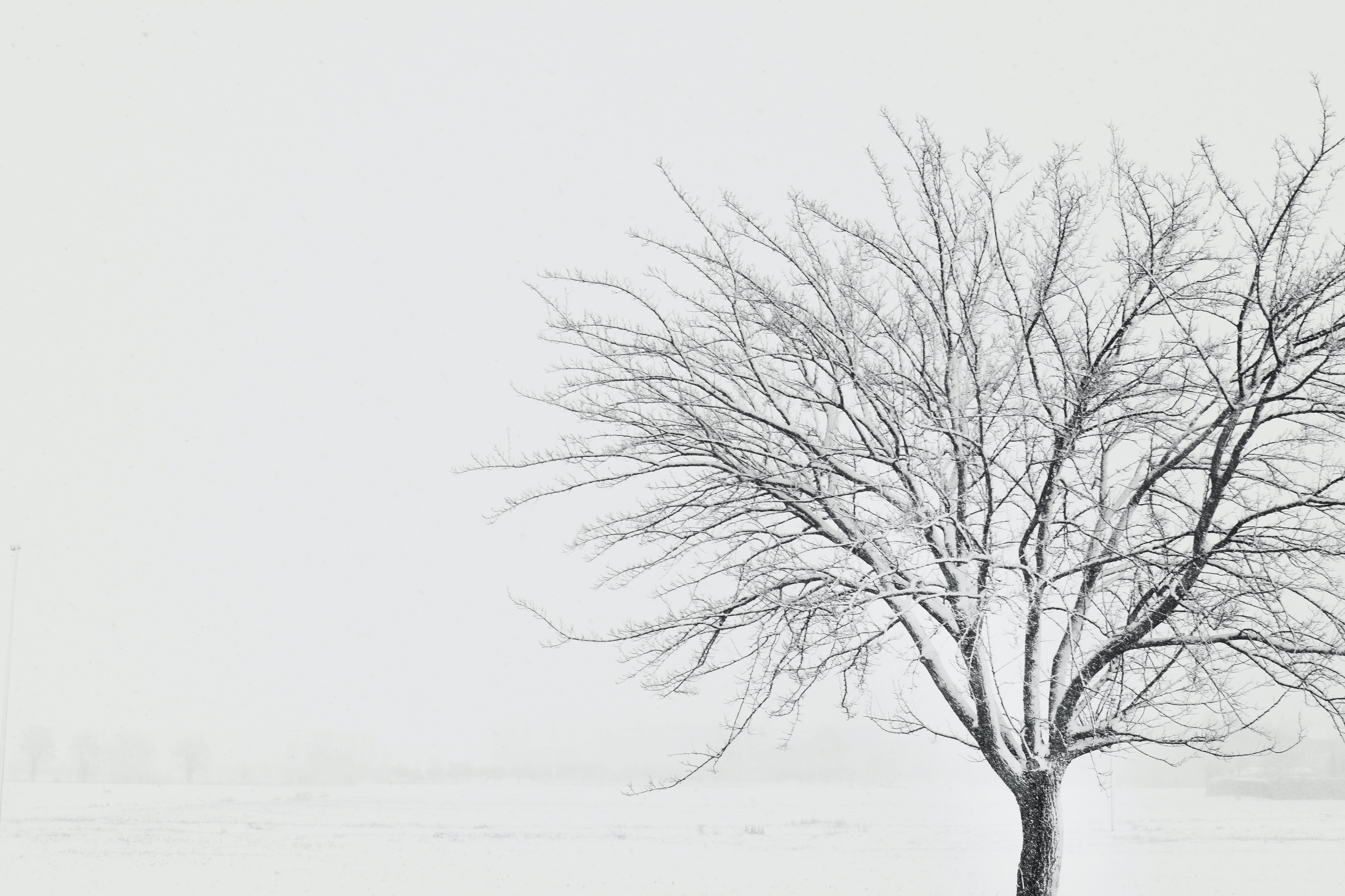 snow covered withered tree on snow field
