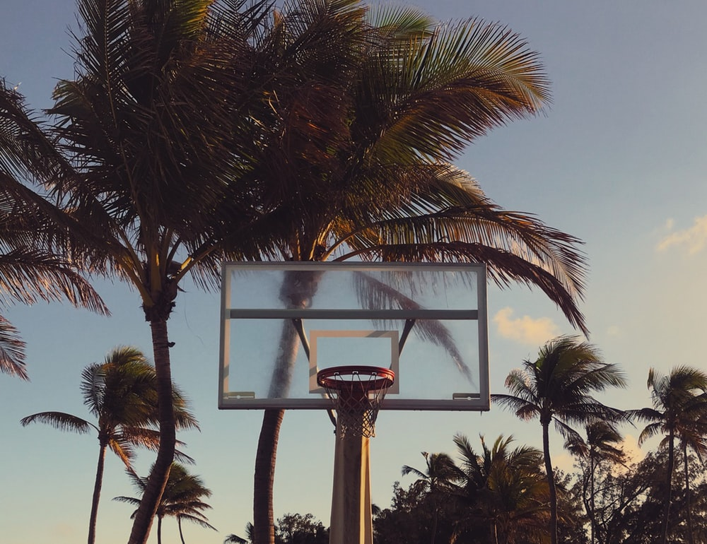 green palm trees near basketball hoop