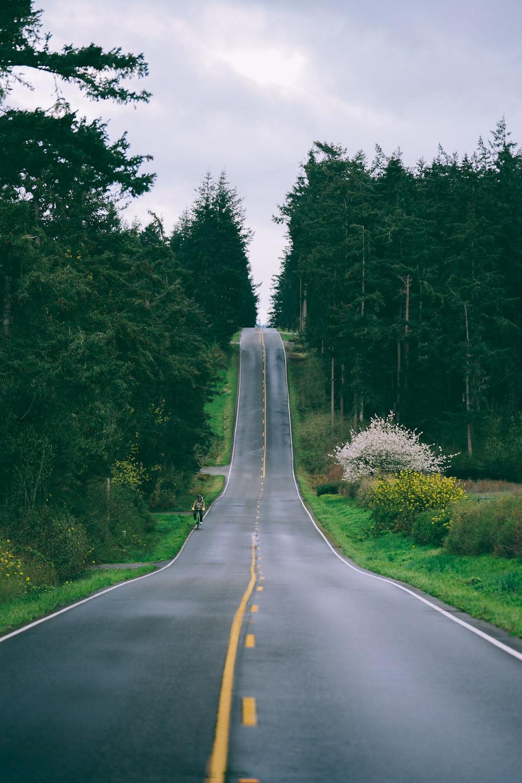 gray concrete road beside green trees