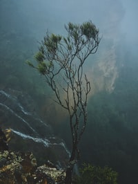 green leafed tree near mountain range