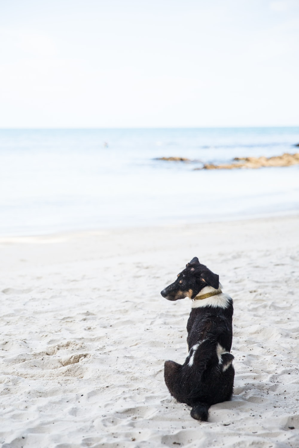 black and white dog sitting on beach sand during daytime