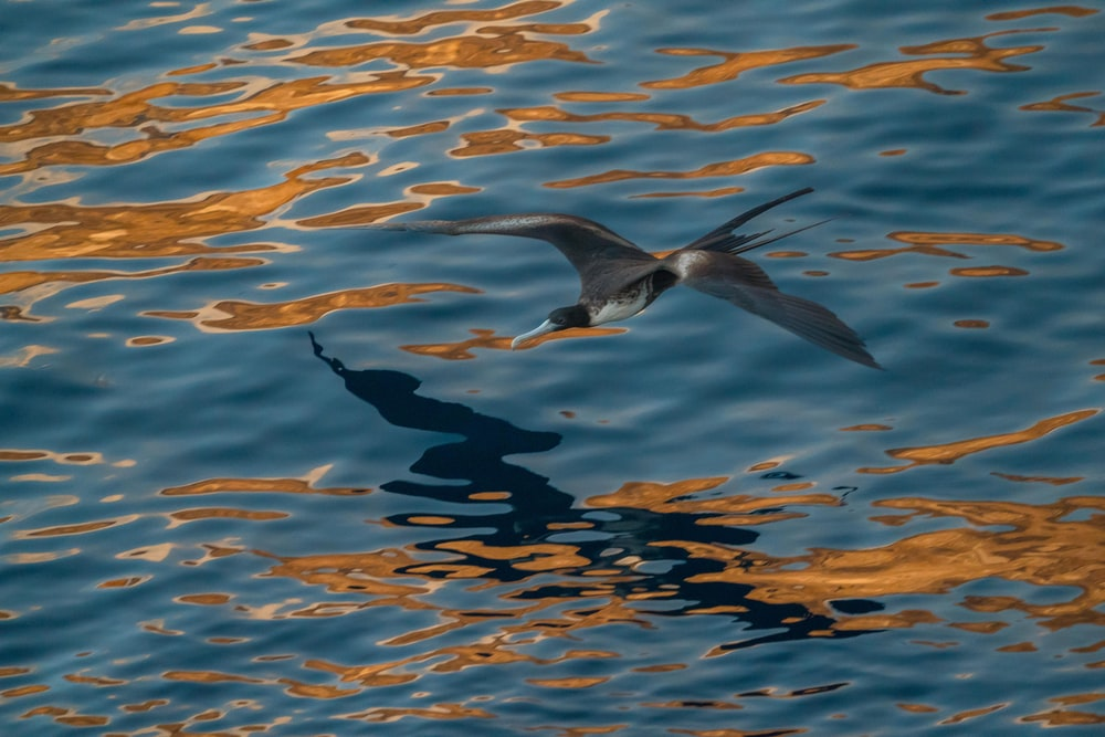 flying black and white bird above body of water