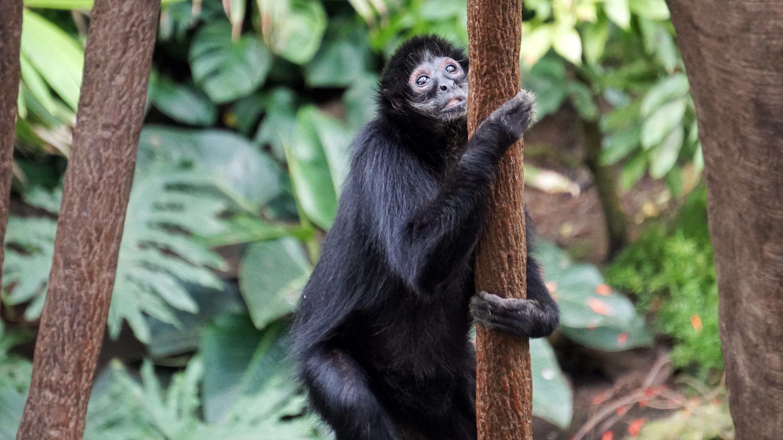 black monkey on brown tree