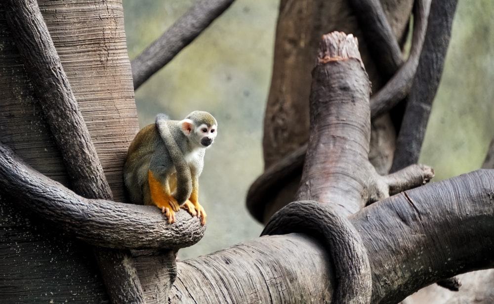 gray monkey sitting on tree branch
