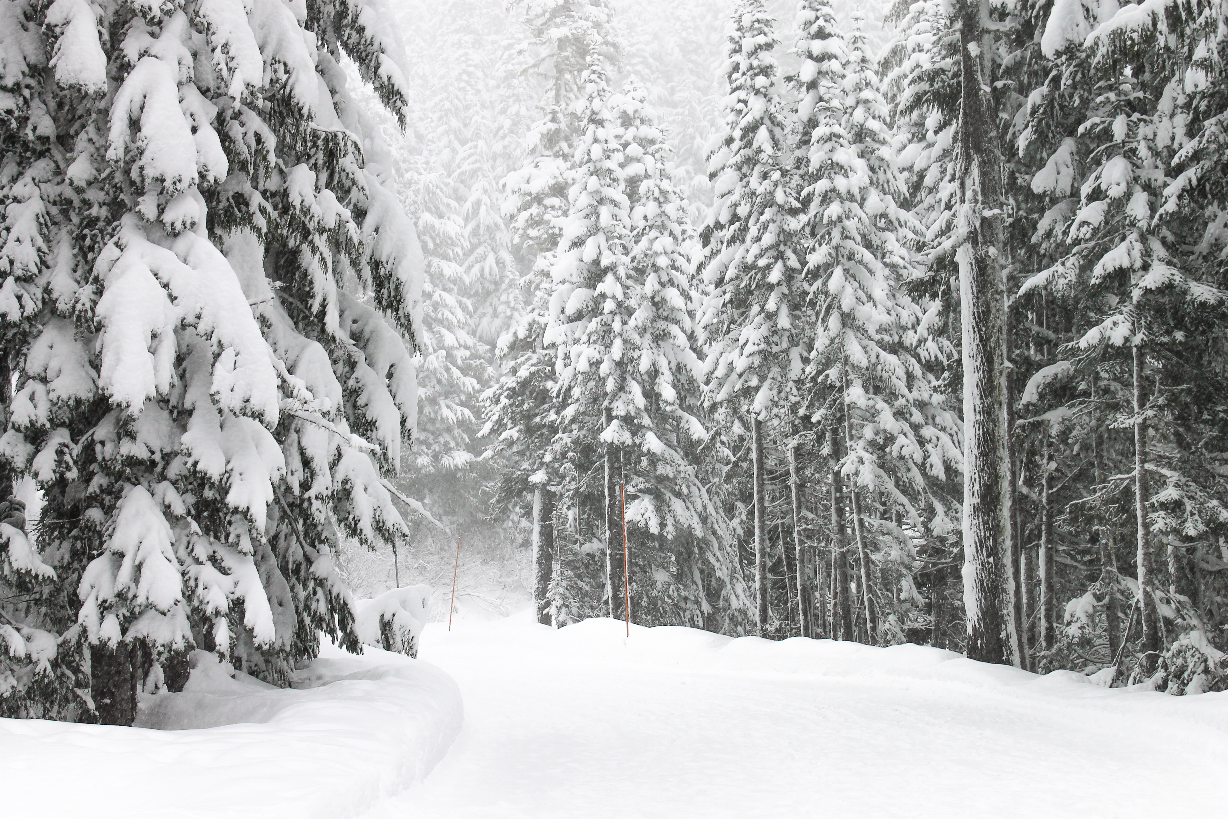 road and trees with snow