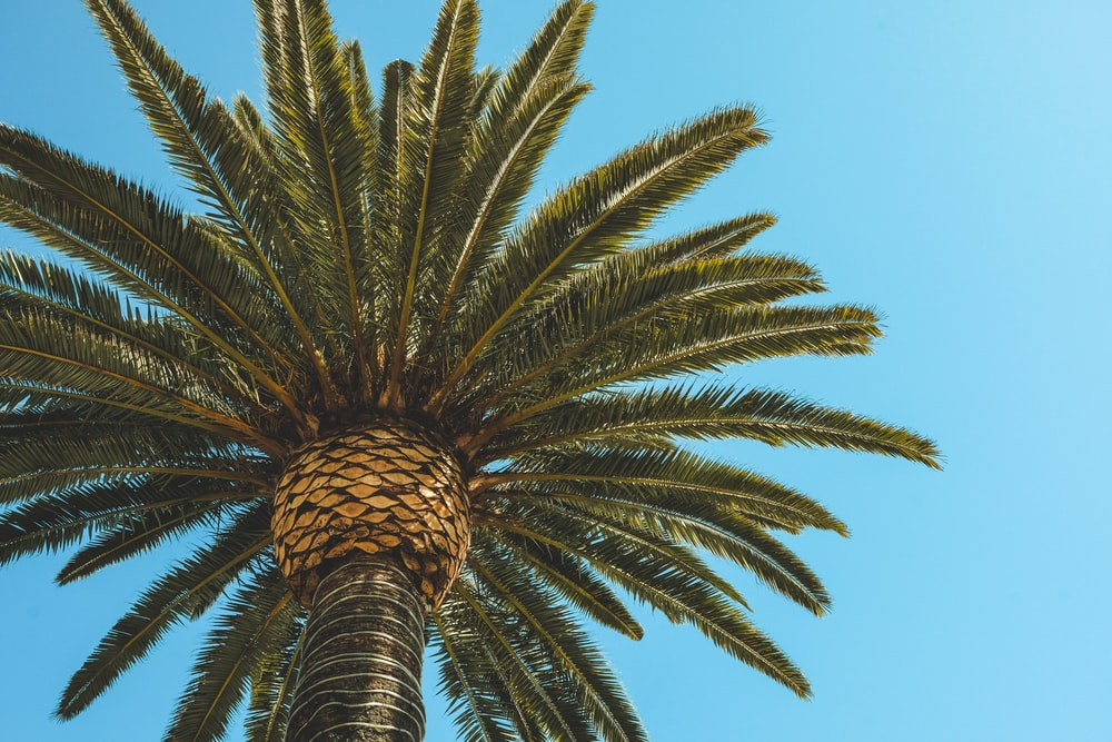 green palm tree in low angle photography