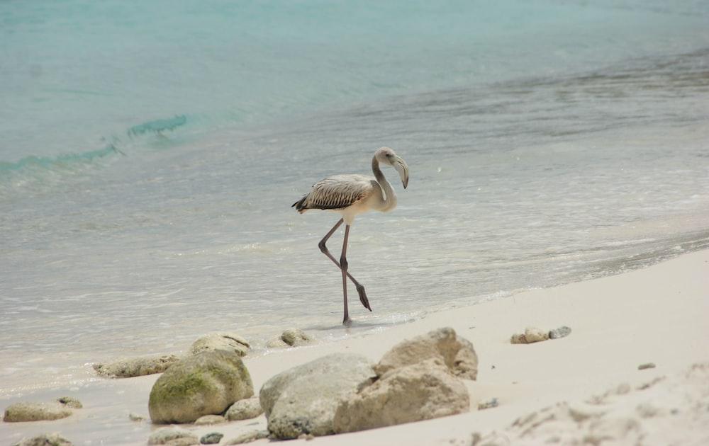 white heron near seashore