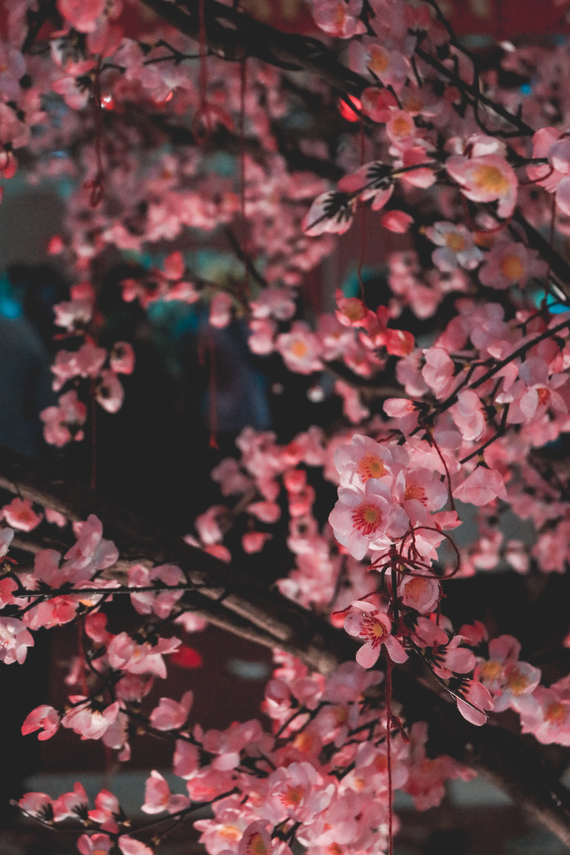 closeup photo of pink flowering tree