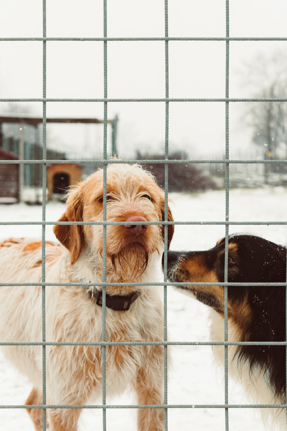 two dog standing over gray fence