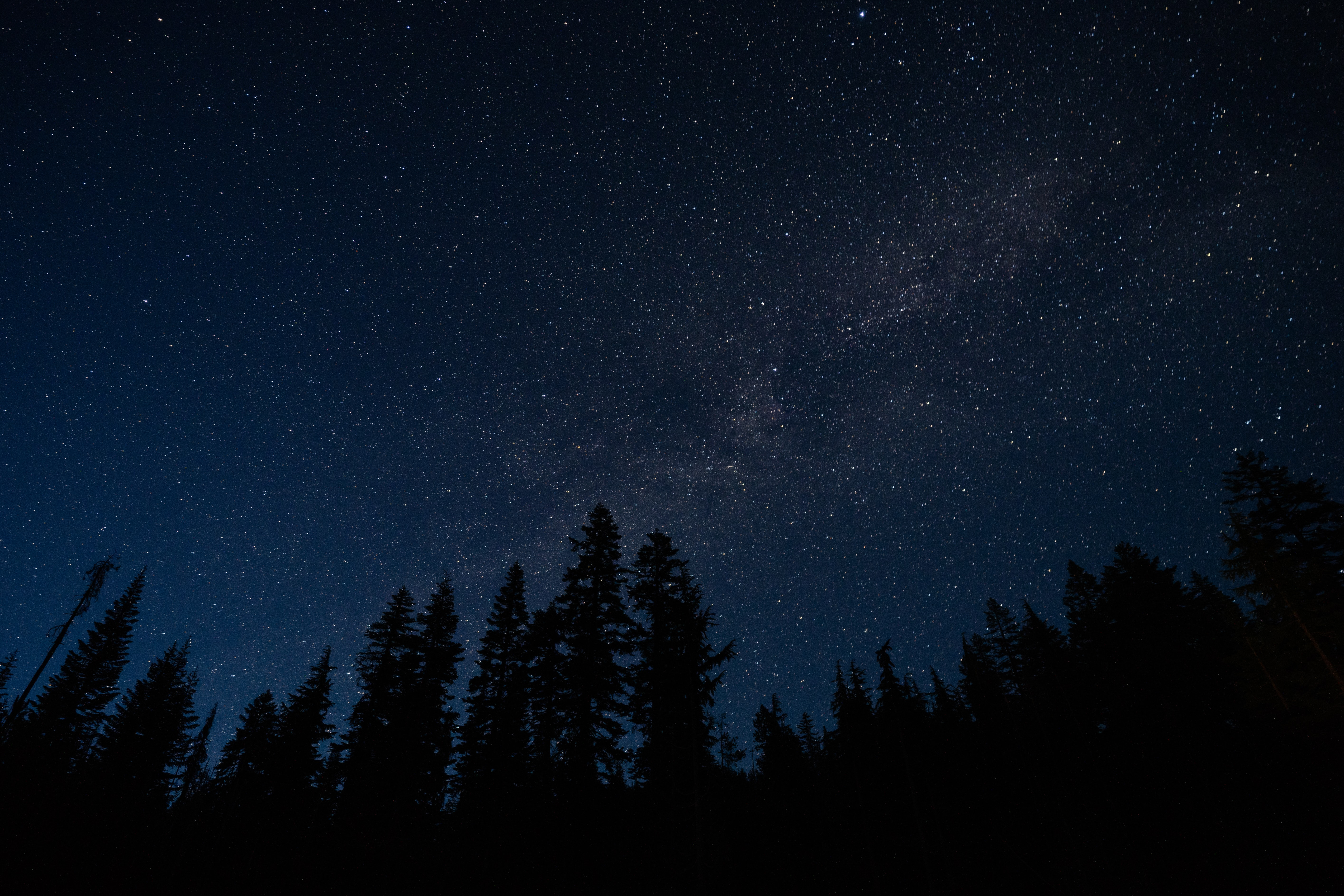 photo of pine tree forest under sky with stars