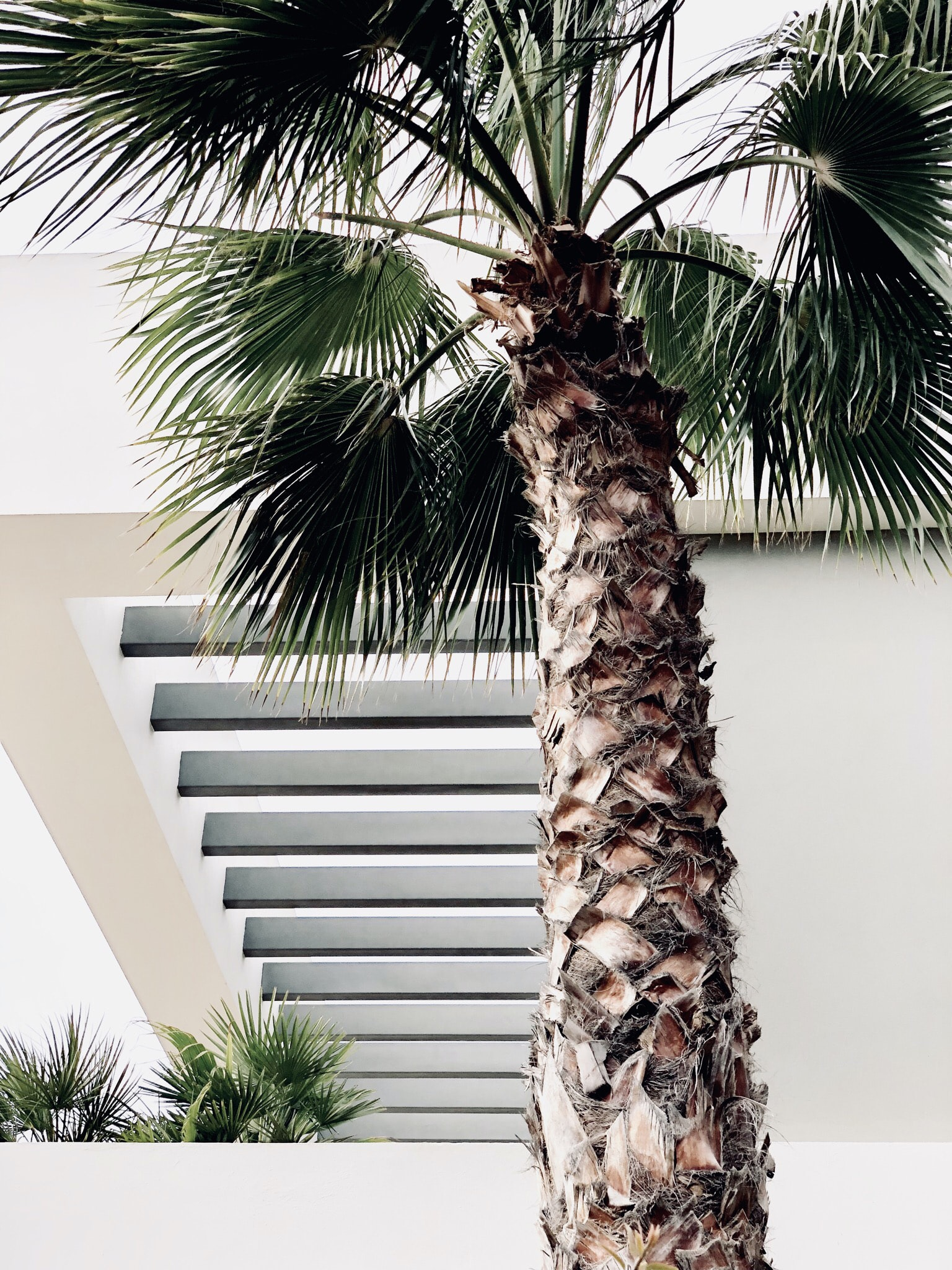 palm tree near white wall
