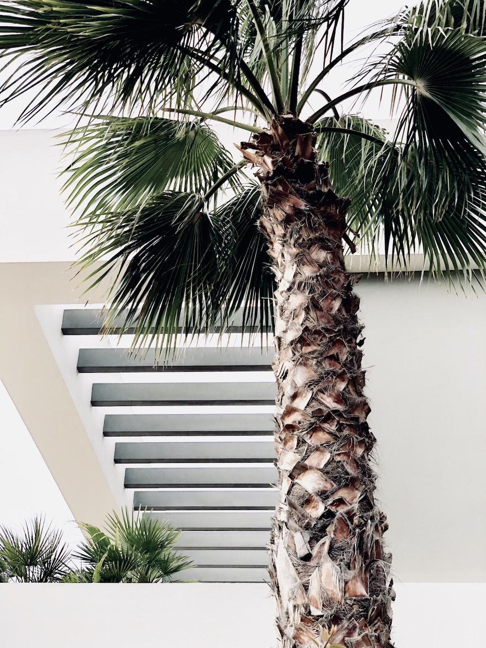 palm tree near white wall