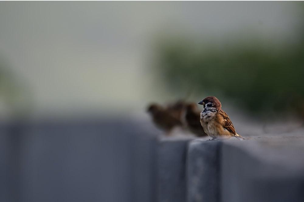 focused photo of brown bird