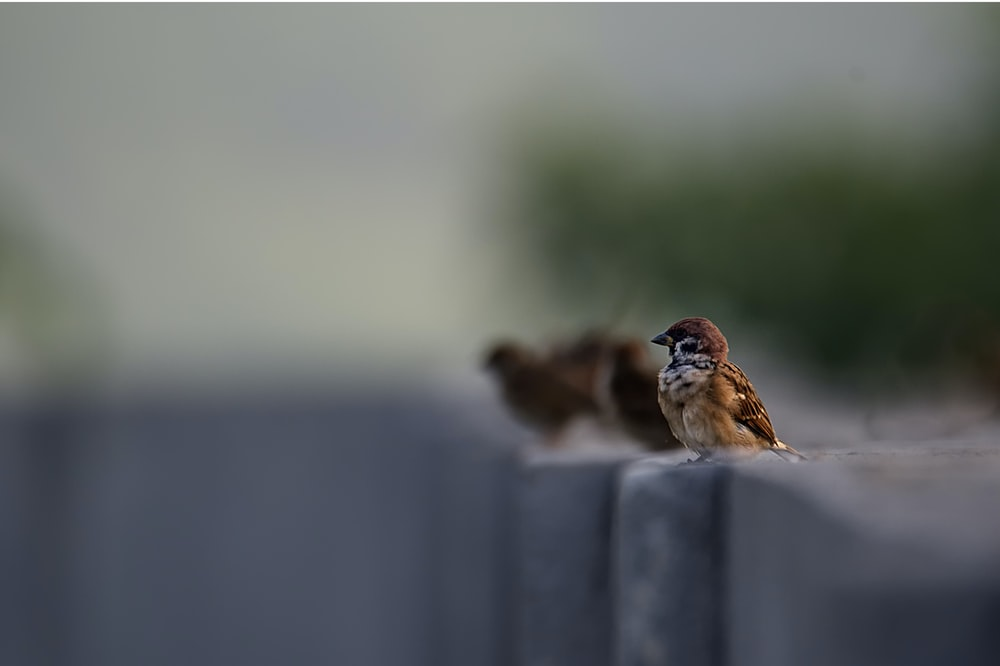 focused photo of brown bird