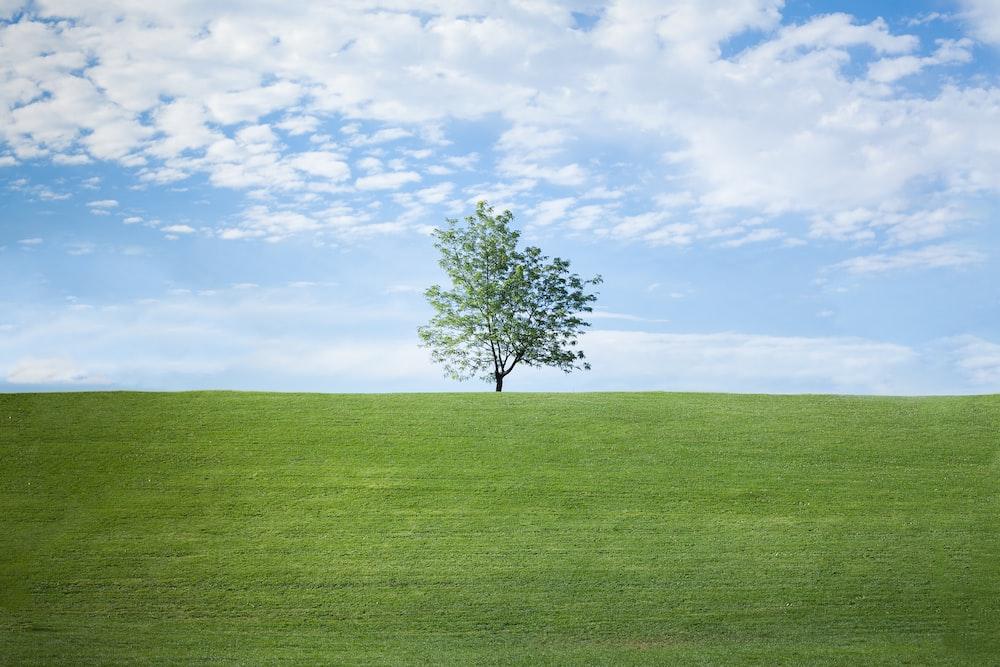 photo of single tree on grass