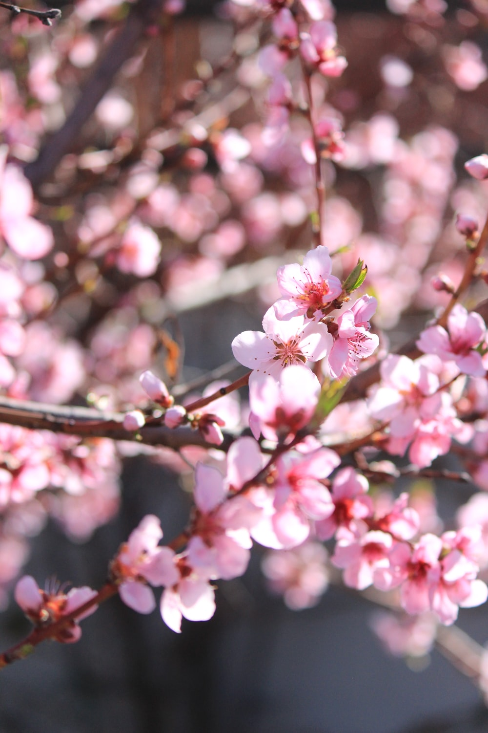 Sunlight Tree Flowers And Blossom Hd Photo By Jessica Fadel