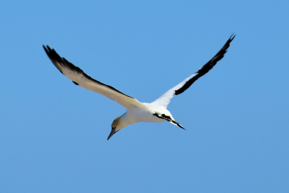 flying white and black bird under blue sky
