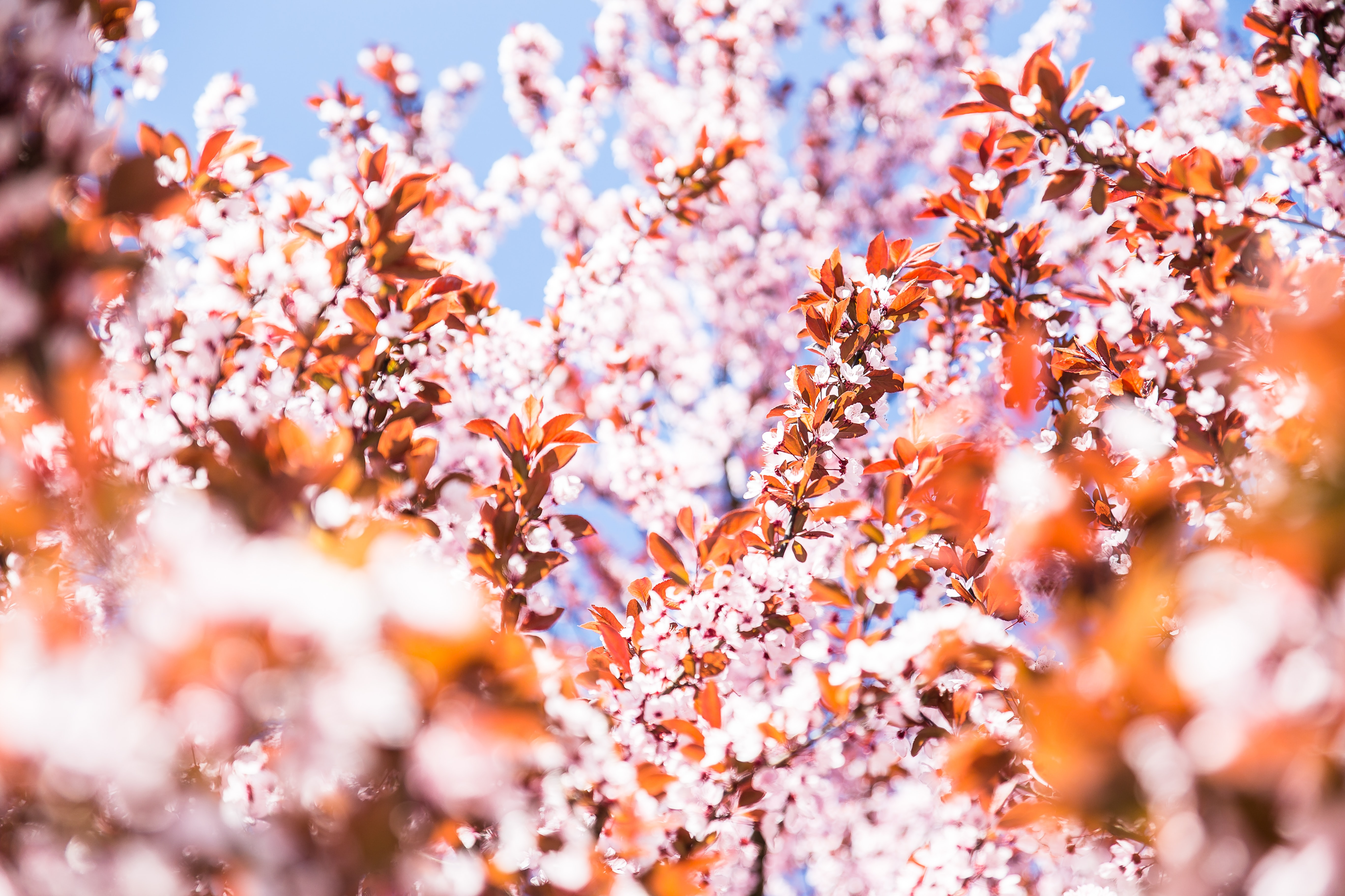 selective focus photography of pink petaled flowers at daytime