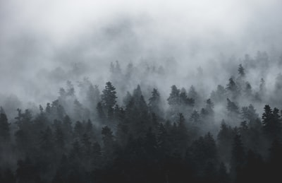 photo of tall trees during foggy day fog zoom background