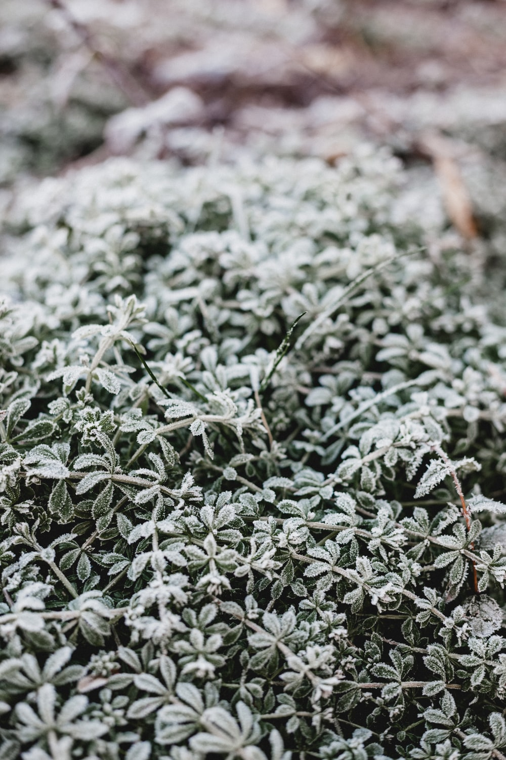 close up photo of frozen plants