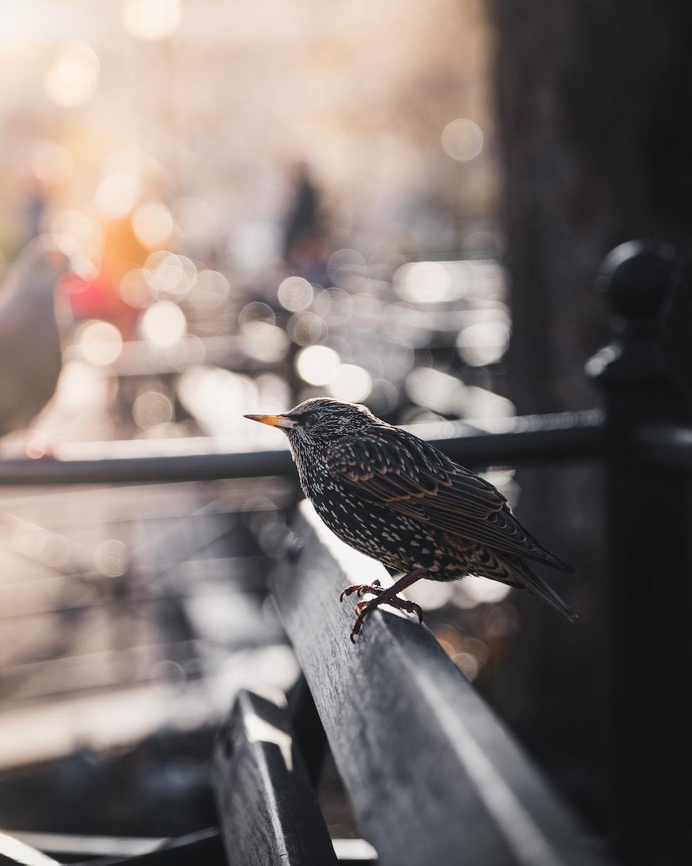 selective focus bokeh photography of gray bird on bench