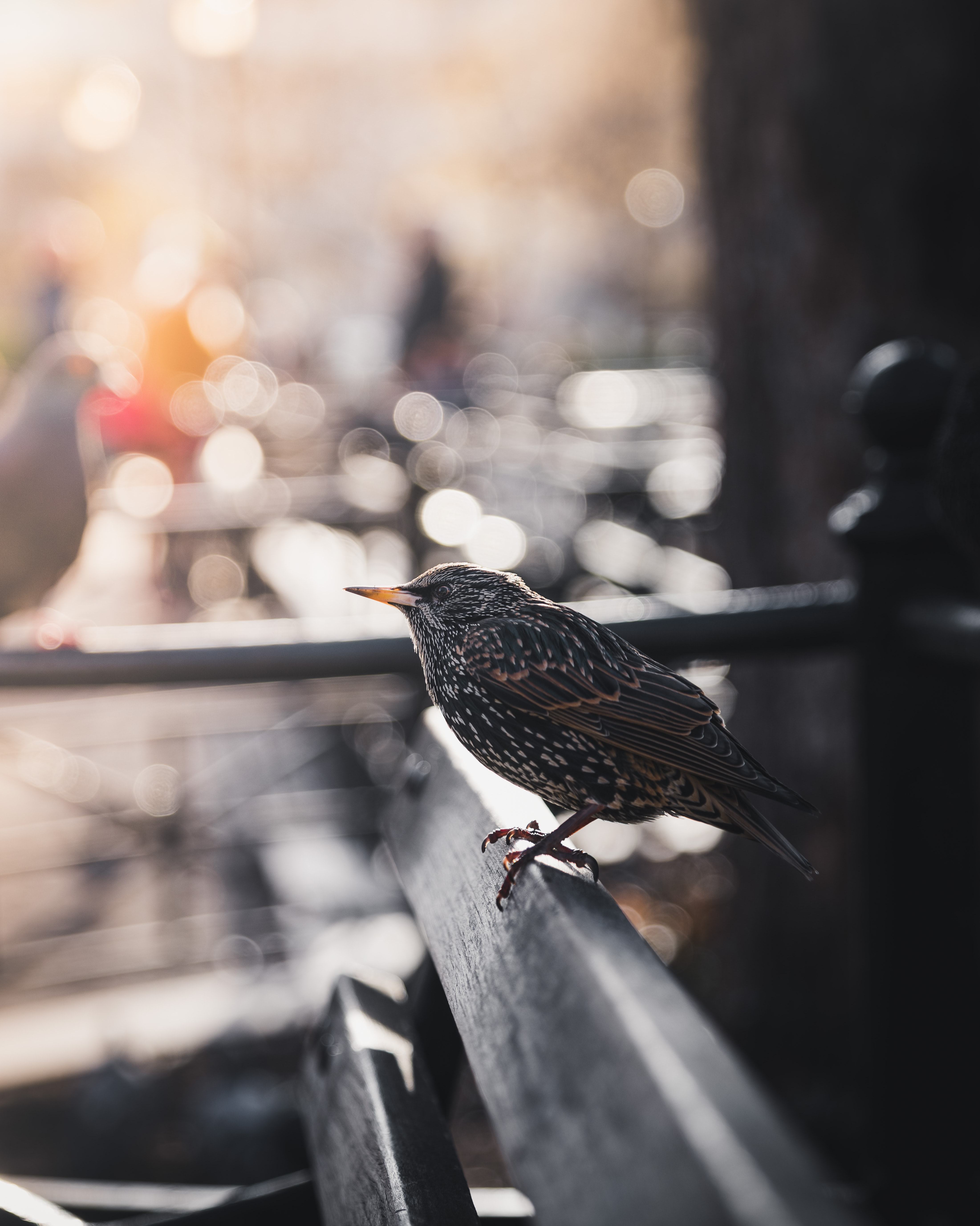 selective focus bokeh photography of gray bird on bench