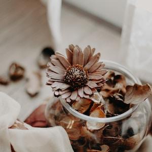 brown petaled flowers in vase inside room at daytime