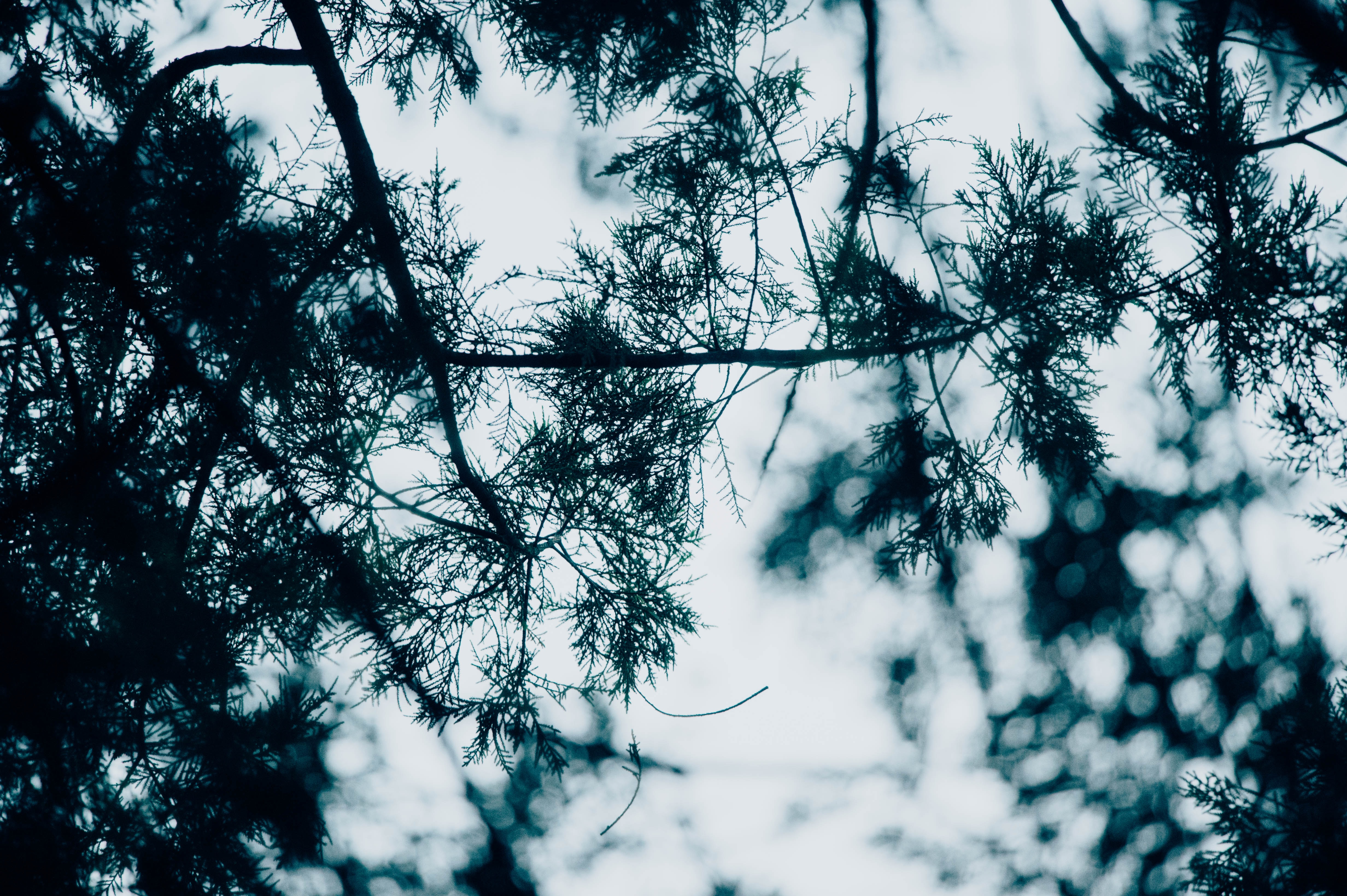worm's-eye view of green leaves under cloudy sky