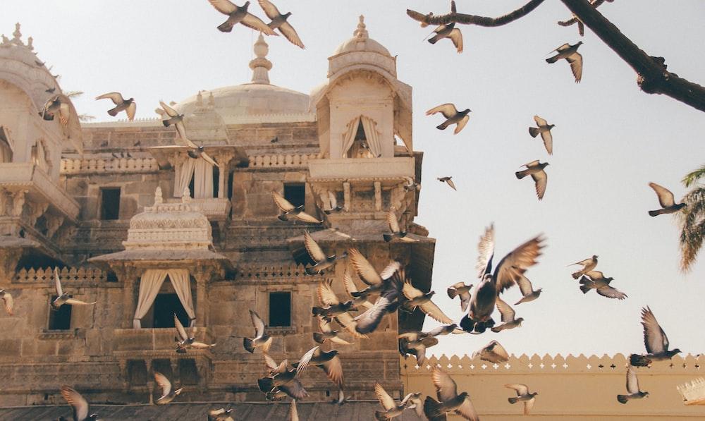 flock of birds during daytime