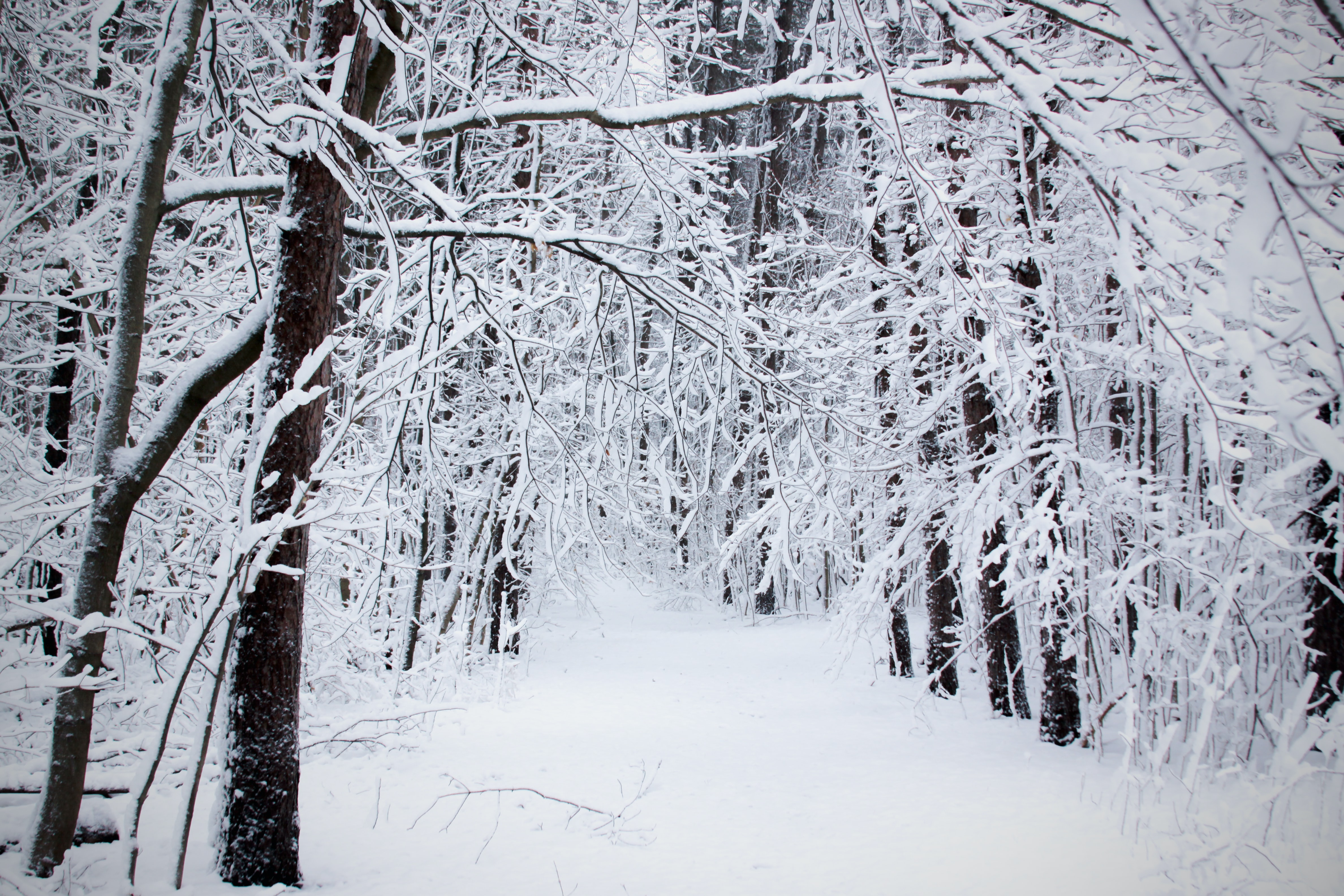 pathway between trees covered with snow