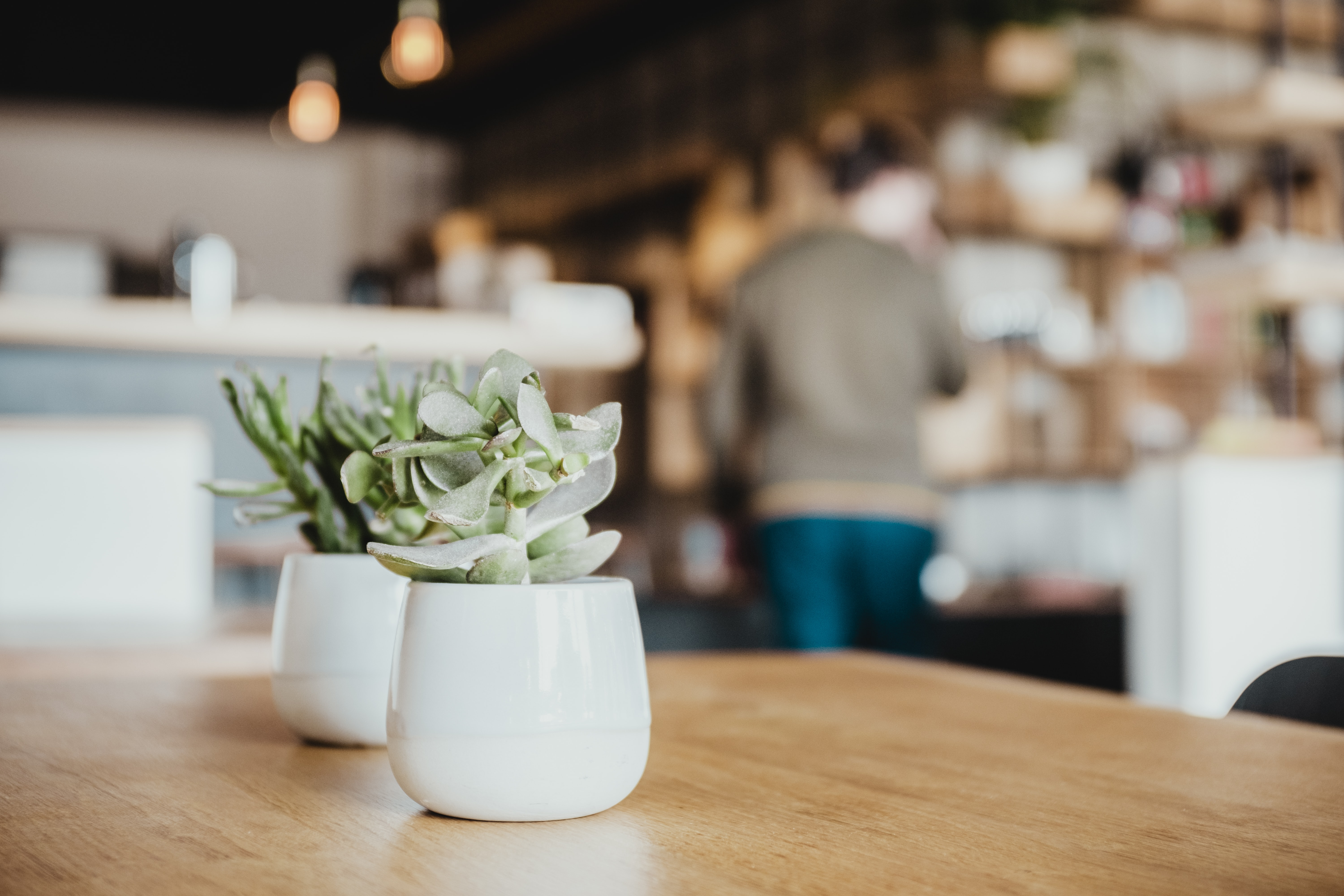 selective focus photography of two white ceramic potted green and white succulents on