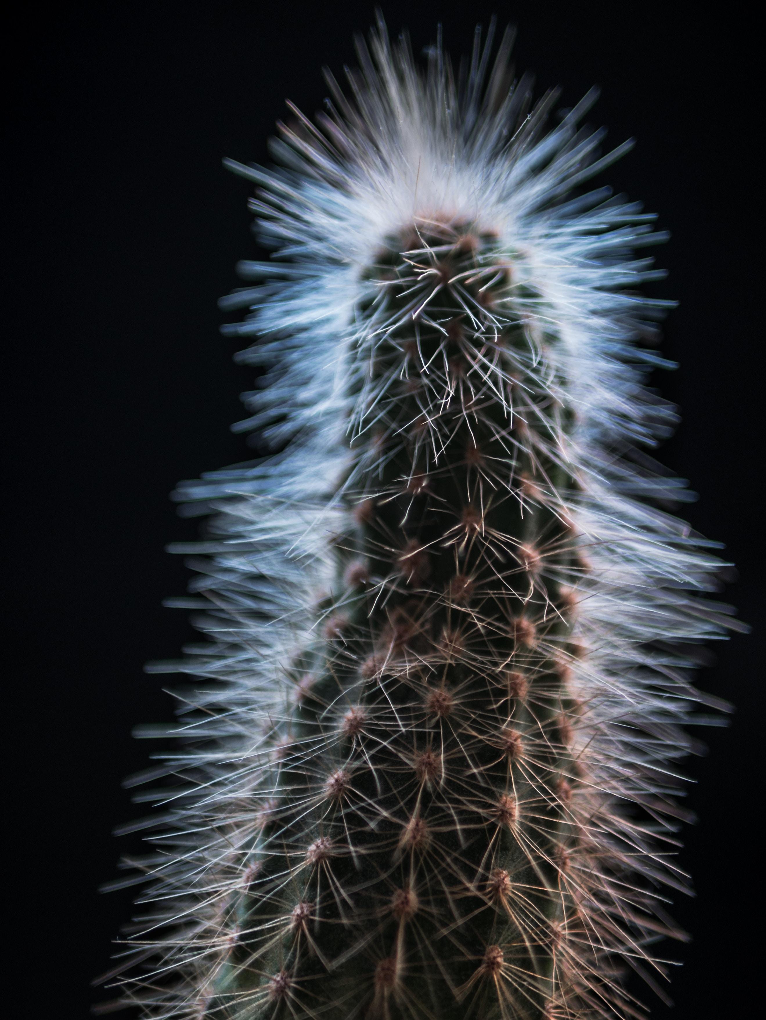 closeup photo of green cactus