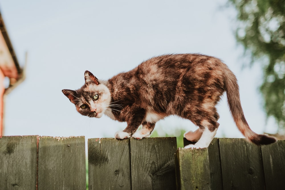 tortoise shell cat on fence