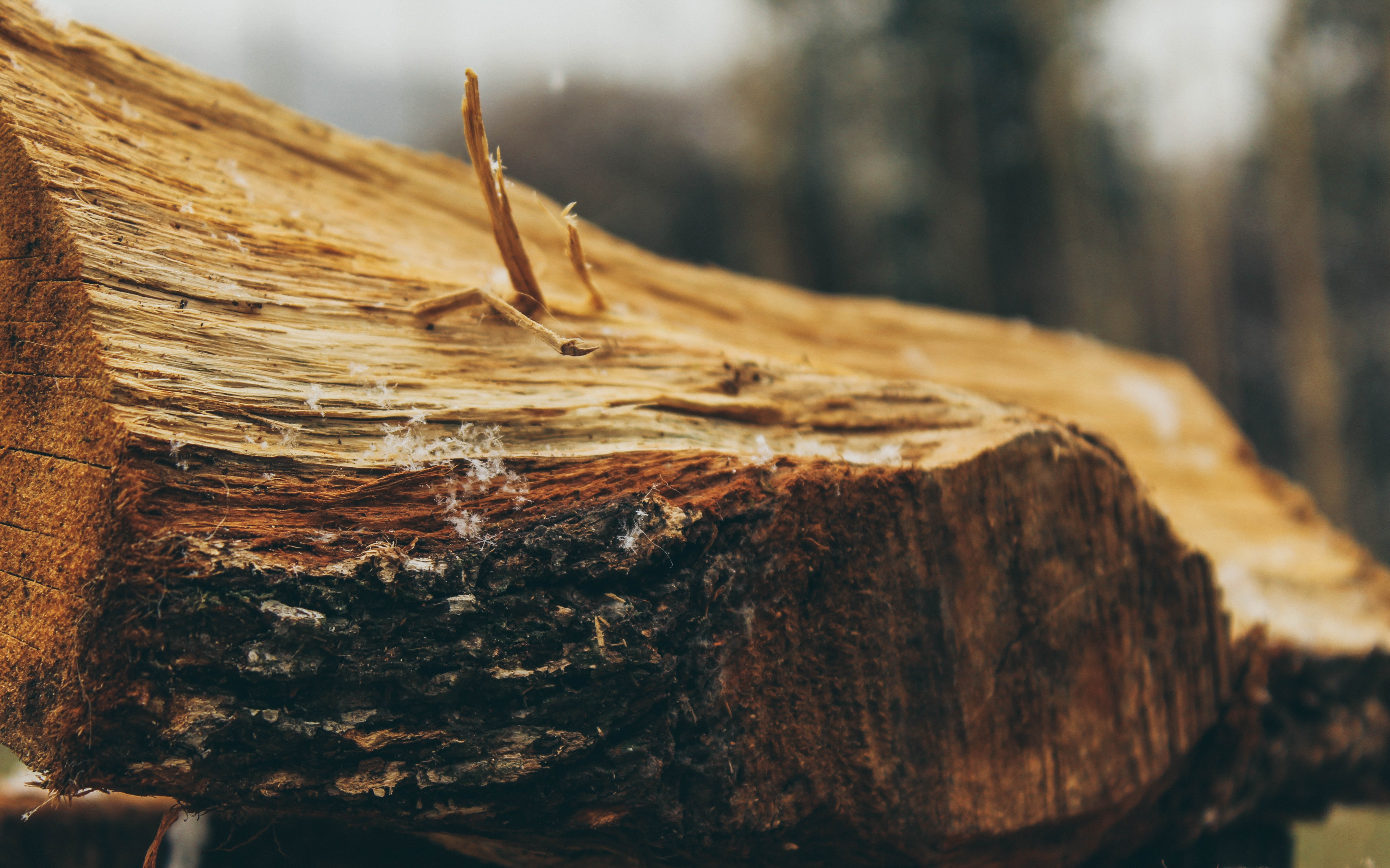 shallow focus photo of brown wood log