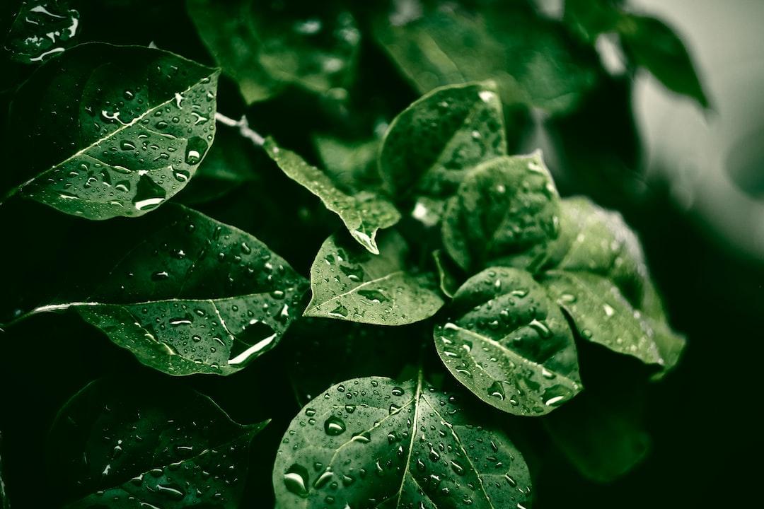 Rebirth rain