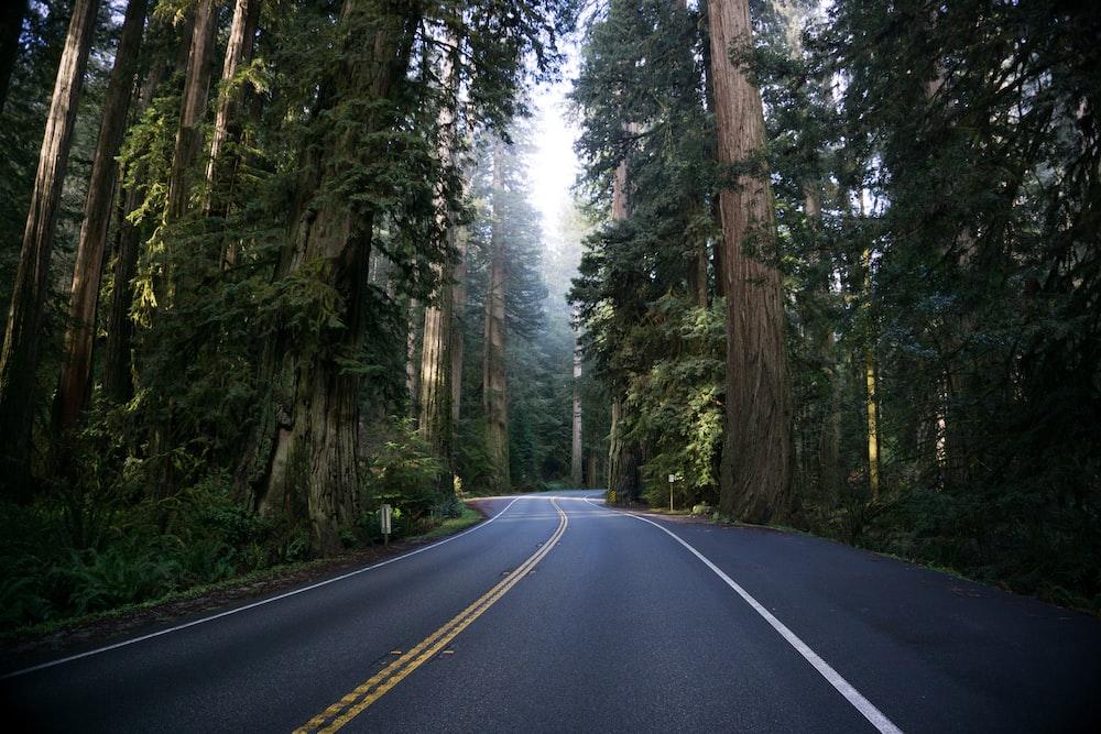 empty road between tall trees