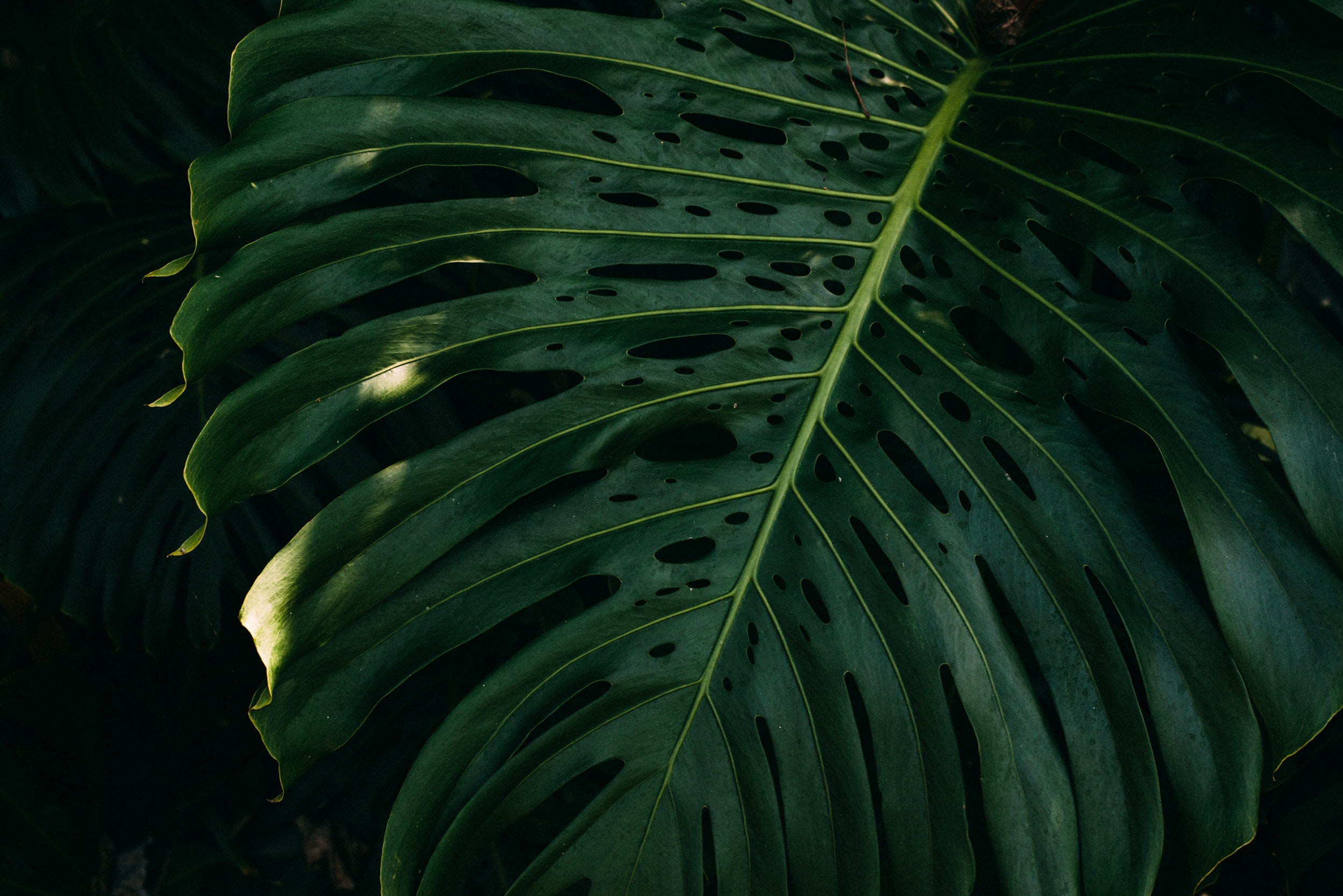 green leaf during daytime