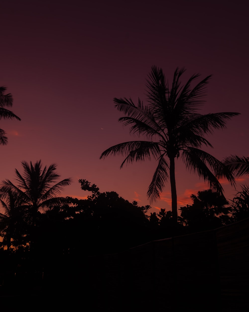 photo of coconut tree during night time