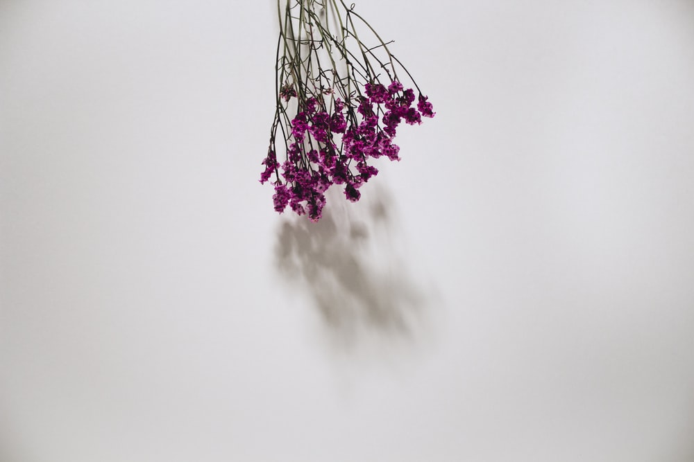 purple petal flowers