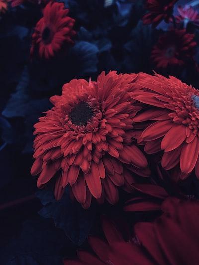 3859. Virágok