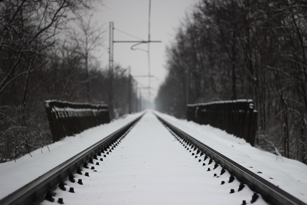 snow covered train rails between bare trees