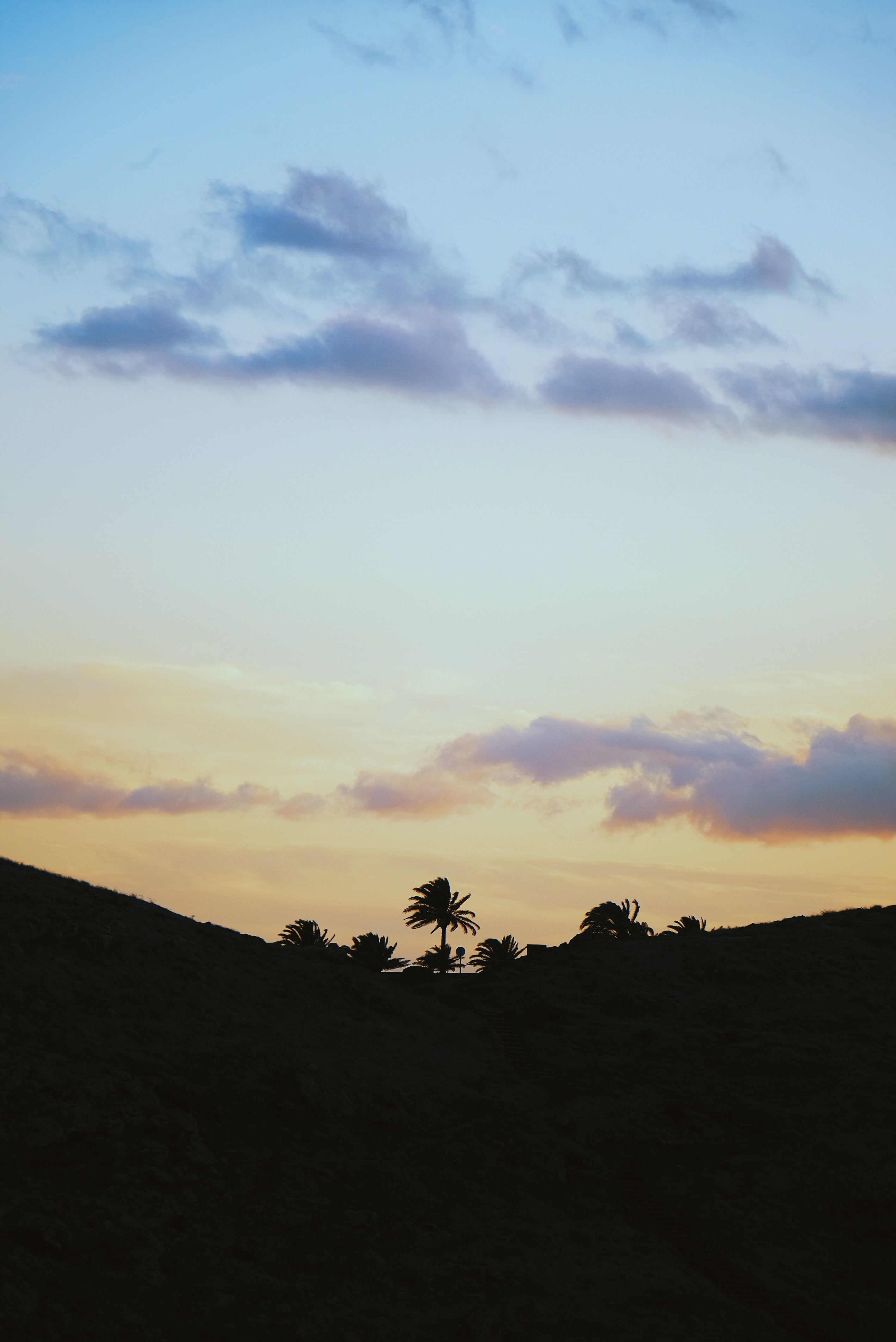 silhouette of palm tree on top of hill