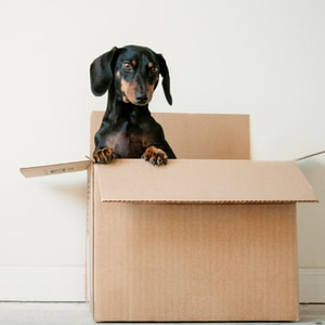 Moving and Pet Transport!