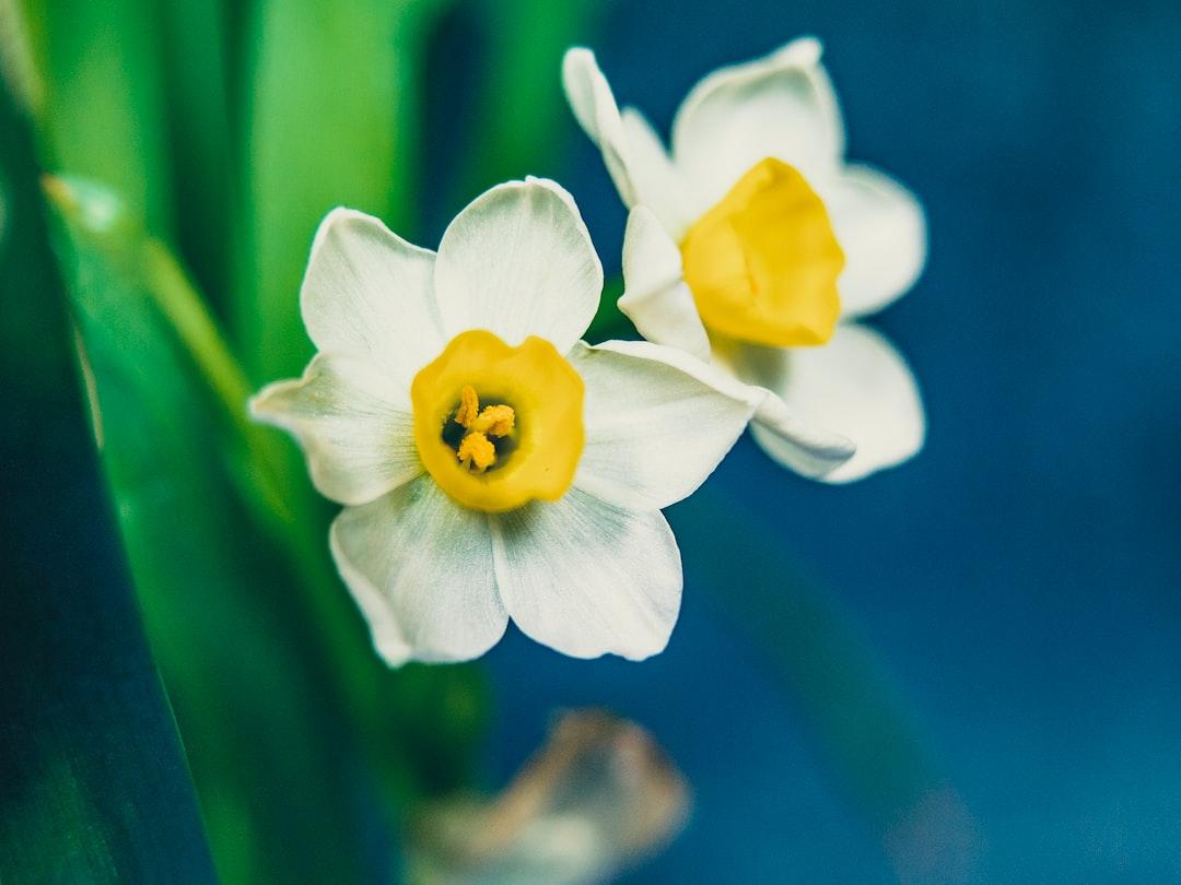 El Narciso. Un ejemplo a (no) seguir