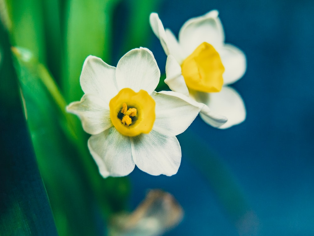 Flower leaves white petals and daffodil hd photo by anita sue photo of yellow and white flowers mightylinksfo